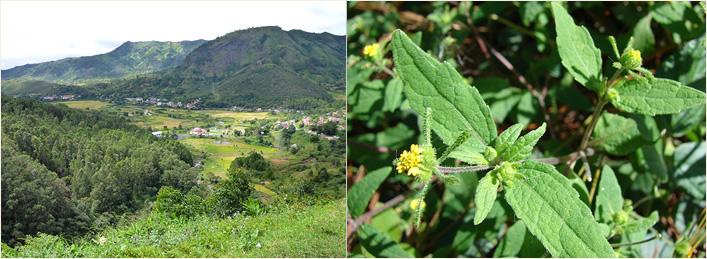 Fileiras Vegetais Certificadas Yves Rocher Madagascar
