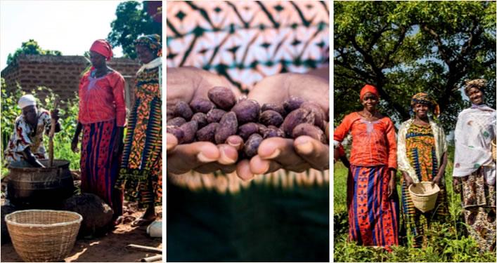 Plantações de Karité em Bougouni, África do Sul. Foto Yves Rocher.